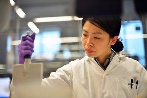 Descubren moléculas que pueden hacer 'autostop' para señalar tumores y destruirlos (PIXABAY)