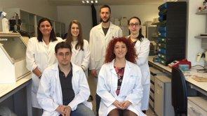 Trabajan en la creación de un sustituto completo de córnea (FIPSE)