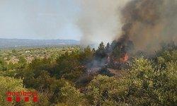 Cinc hectàrees de vegetació cremades per un incendi a Xerta que ja està estabilitzat (ACN)