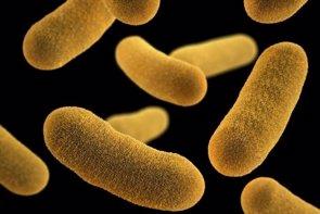 Disminuir las bacterias peligrosas puede ser más eficaz que matarlas (ILLUSTRATION BY JENNIFER OOSTHUIZEN, CDC)